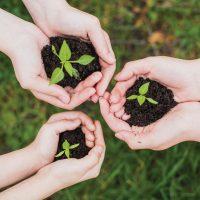 Tres Plantas